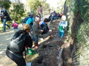 Planting volunteers