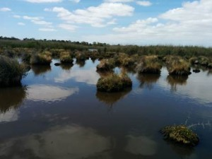 Seaford Wetlands